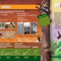 8. Erdő és ember
